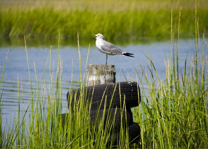 Seagull Greeting Card featuring the photograph Seagull At Weeks Landing by Bill Cannon