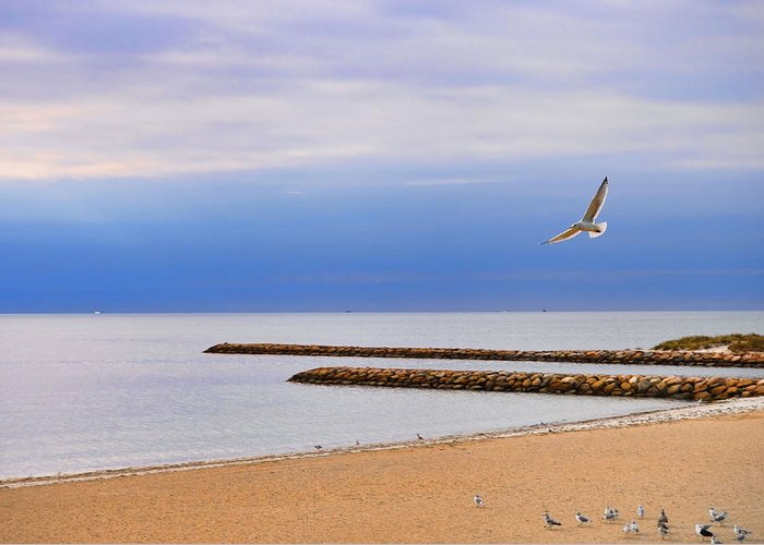Landscape Greeting Card featuring the photograph Seagulls And Sun by Tina Baxter
