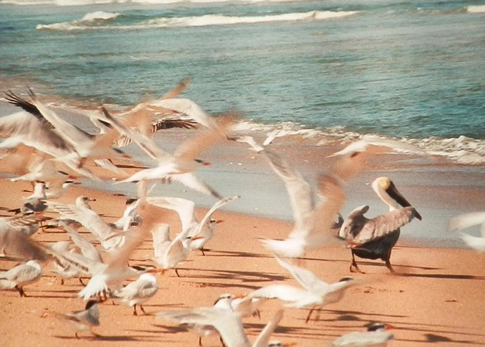 Birds In Flight On Miami Beach Greeting Card featuring the photograph Seagulls In Flight by Belinda Lee