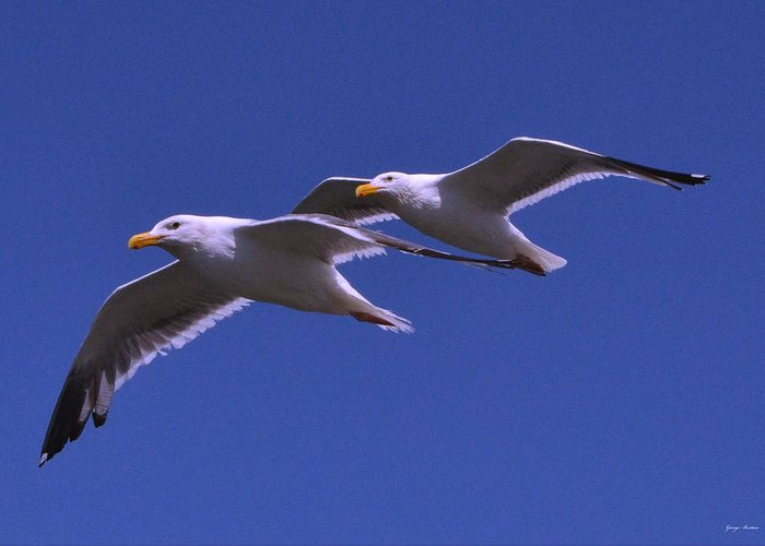 Seagull Greeting Card featuring the photograph Seagulls In Flight by George Bostian