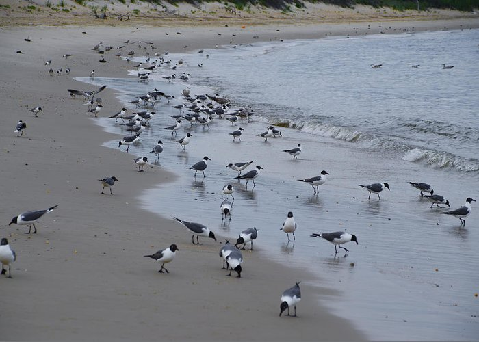 Seagulls Greeting Card featuring the photograph Seagulls On The Delaware Bay by Bill Cannon