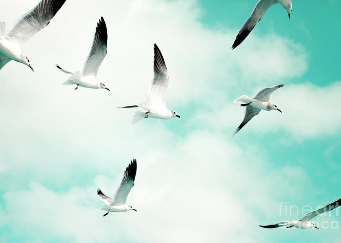 Seagull Photography Greeting Card featuring the photograph Seagulls Soaring by Kim Fearheiley