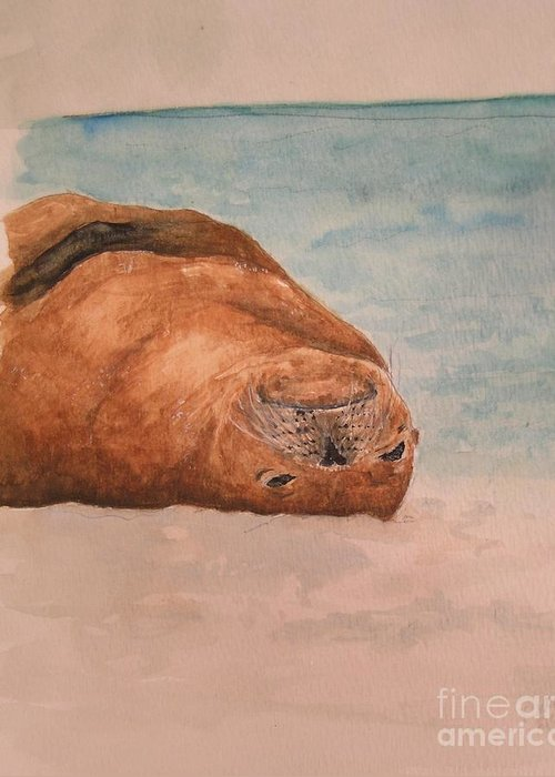 Wildlife Greeting Card featuring the painting Seal 1 by Kathy Carothers