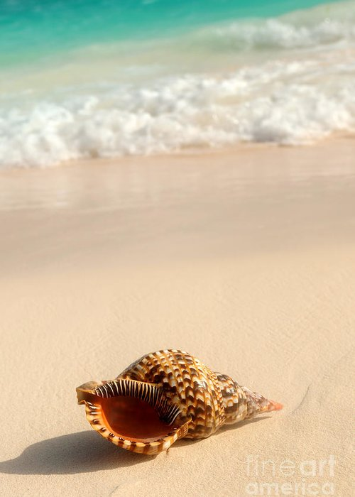 Seashell Greeting Card featuring the photograph Seashell And Ocean Wave by Elena Elisseeva