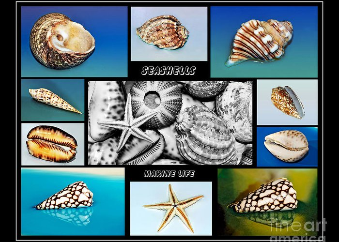 Photography Greeting Card featuring the photograph Seashell Collection by Kaye Menner