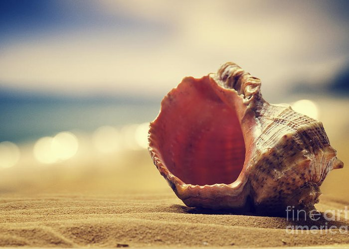 Beach Greeting Card featuring the pyrography Seashell In The Sand by Jelena Jovanovic