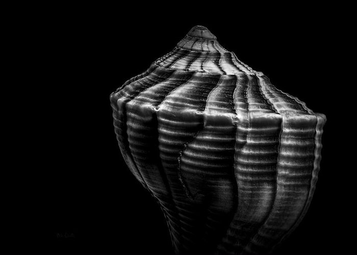 Shell Greeting Card featuring the photograph Seashell On Black by Bob Orsillo