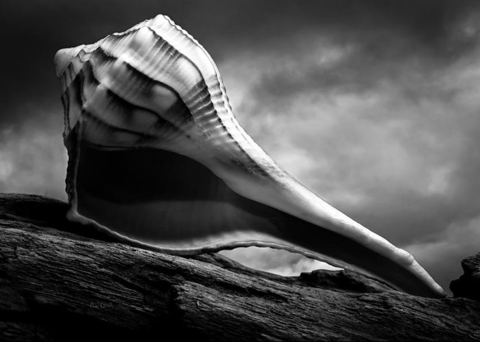 Shell Greeting Card featuring the photograph Seashell Without The Sea 3 by Bob Orsillo