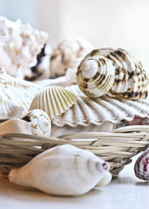 Seashell Greeting Card featuring the photograph Seashells by Elena Elisseeva