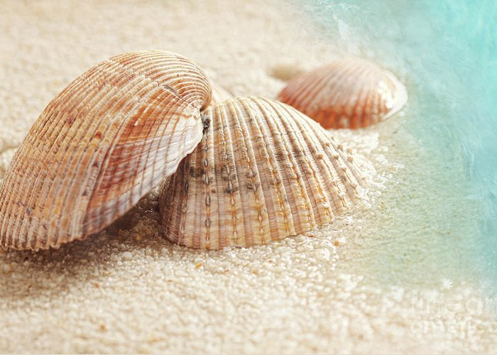 Backdrop Greeting Card featuring the photograph Seashells In The Wet Sand by Sandra Cunningham