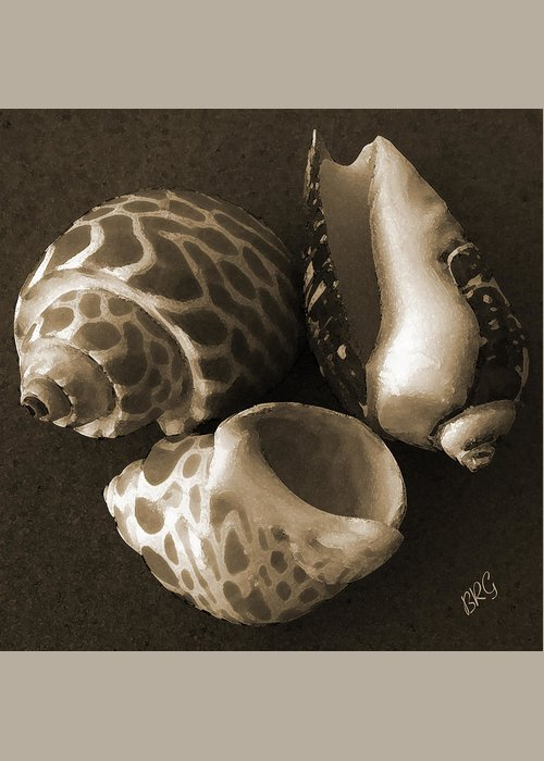 Seashell Greeting Card featuring the photograph Seashells Spectacular No 1 by Ben and Raisa Gertsberg