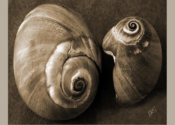 Seashell Greeting Card featuring the photograph Seashells Spectacular No 6 by Ben and Raisa Gertsberg