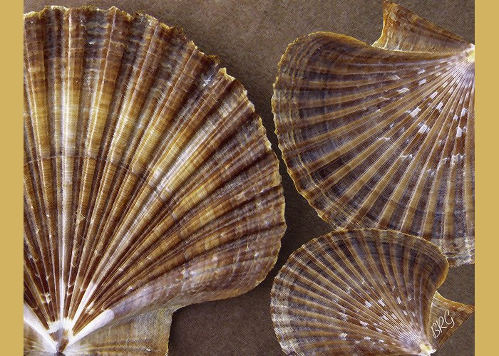 Seashell Greeting Card featuring the photograph Seashells Spectacular No 7 by Ben and Raisa Gertsberg