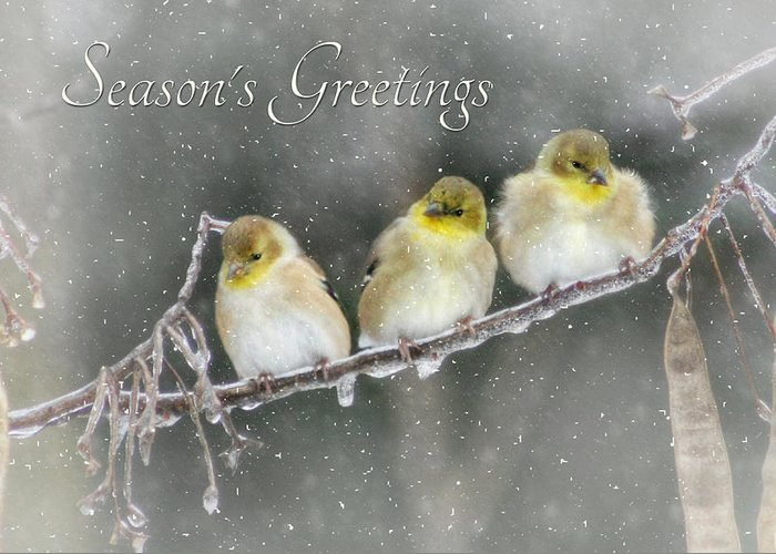Seasons Greetings Greeting Card featuring the photograph Season's Greetings by Lori Deiter