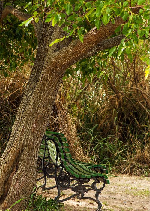 Tree Greeting Card featuring the photograph Secluded Park Benches by Jess Kraft
