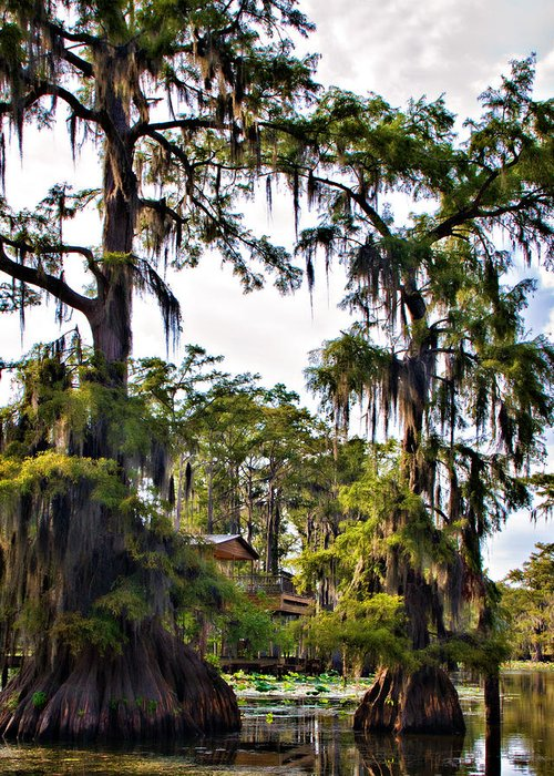 Caddo Lake Greeting Card featuring the photograph Secluded Retreat by Lana Trussell