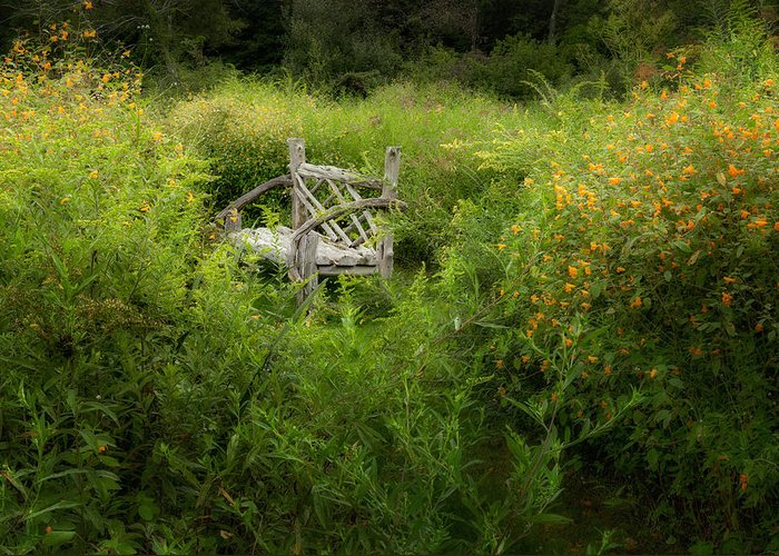 Bench Greeting Card featuring the photograph Seclusion by Bill Wakeley