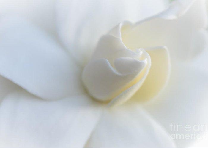 Gardenia Greeting Card featuring the photograph Secret Love by Tamara Becker