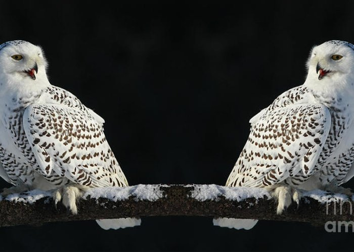 Owls Greeting Card featuring the photograph Seeing Double- Snowy Owl At Twilight by Inspired Nature Photography Fine Art Photography
