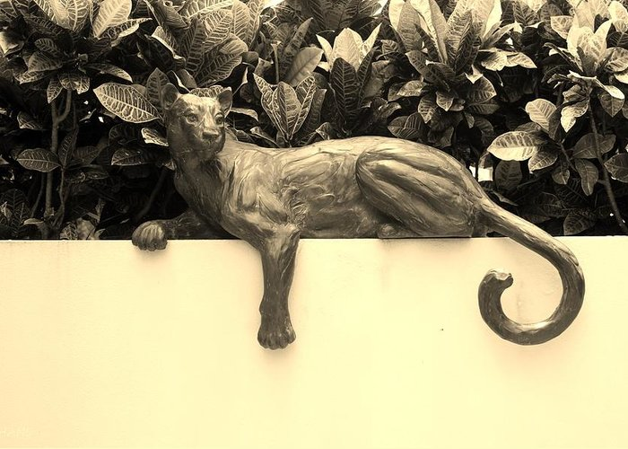 Cat Greeting Card featuring the photograph Sepia Cat by Rob Hans