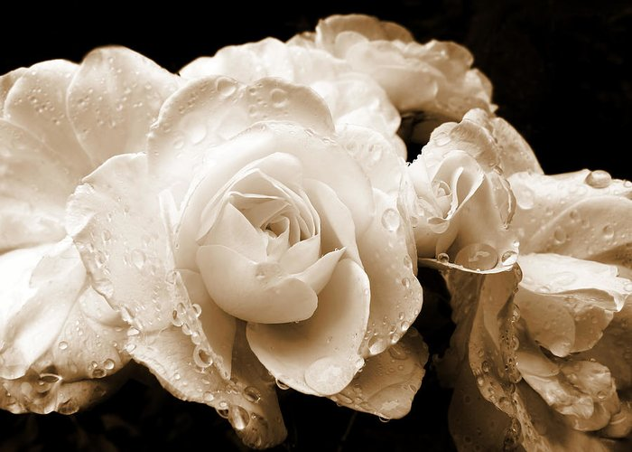 Rose Greeting Card featuring the photograph Sepia Roses With Rain Drops by Jennie Marie Schell