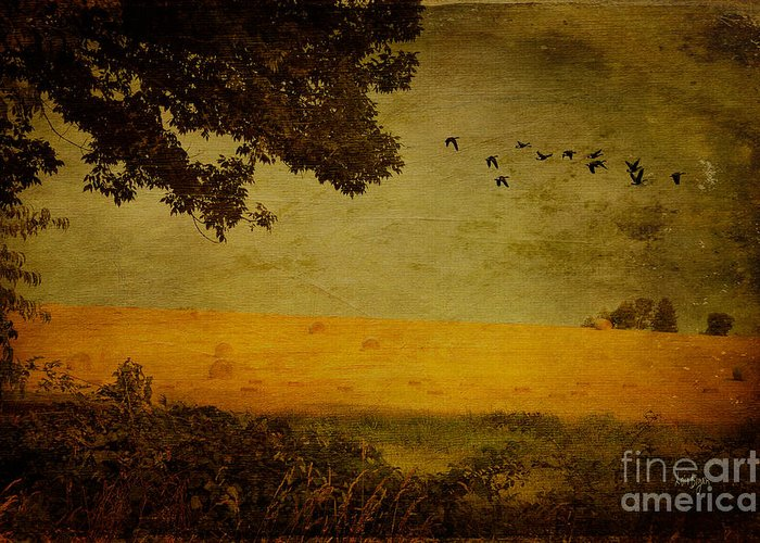 Field Greeting Card featuring the photograph September by Lois Bryan