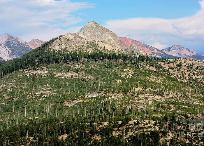 National Park Greeting Card featuring the photograph Sequoi National Park by Sophie Vigneault