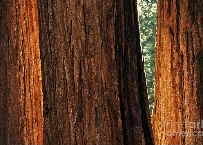 Sequoia Greeting Card featuring the photograph Sequoia by Chris Howes