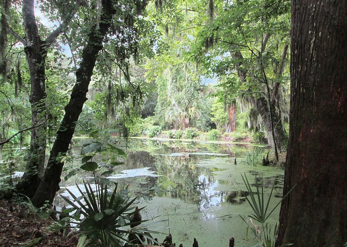 Nature Greeting Card featuring the photograph Serene Swamp by Silvie Kendall
