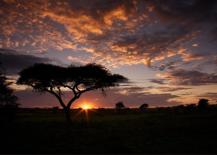 Sunrise Greeting Card featuring the photograph Serengeti Sunrise by Michael Underhill