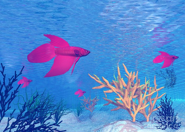 Animal Greeting Card featuring the digital art Several Red Betta Fish Swimming by Elena Duvernay