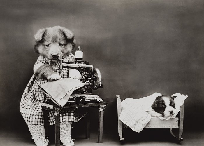 Dog Greeting Card featuring the photograph Sewing Baby Clothes by Aged Pixel