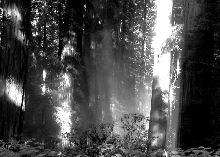 Noir Greeting Card featuring the photograph Shade Of Ghosts by Lilliana Autumn
