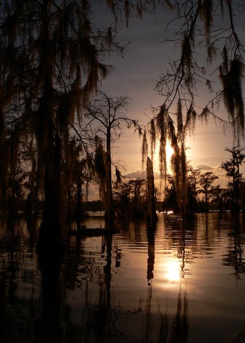 Landscape Greeting Card featuring the photograph Shade On The Bayou by Kimo Fernandez