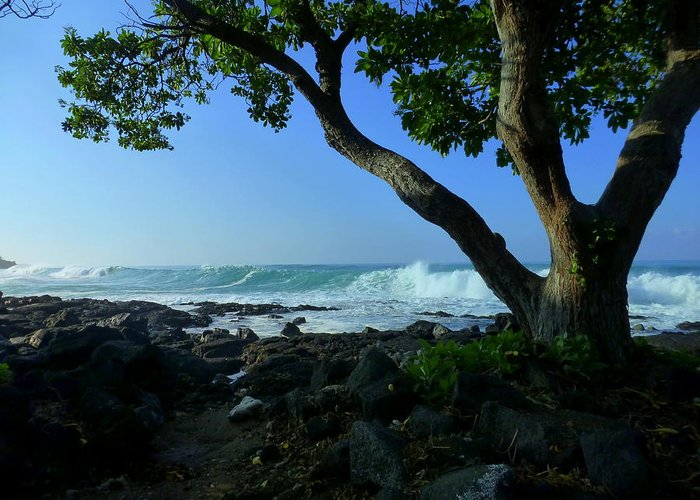 Tree Greeting Card featuring the photograph Shade On The Shore by Lori Seaman