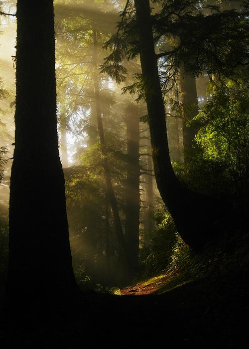 Trees Greeting Card featuring the photograph Shadow Dreams by Jeff Swan
