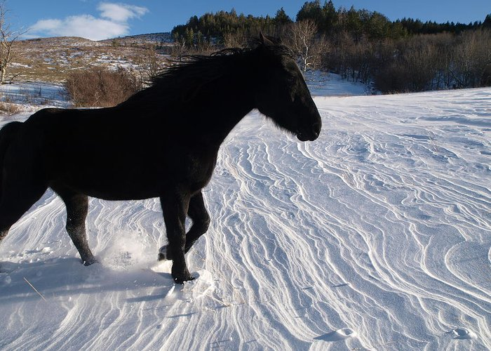 Horse Greeting Card featuring the photograph Shadow by Jenessa Rahn