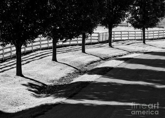 Bw Greeting Card featuring the photograph Shadow Patterns by Claudia Kuhn
