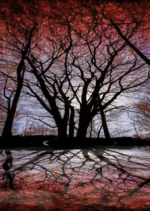 Tree Greeting Card featuring the photograph Shadow Secrets by Bob Orsillo