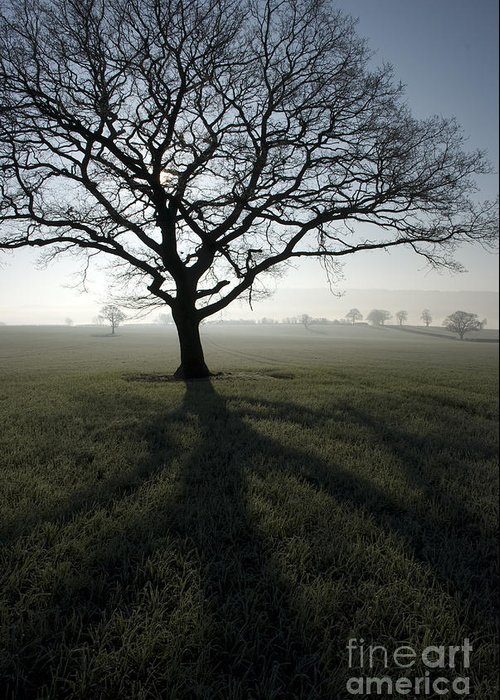 Acton Greeting Card featuring the photograph Shadow Tree by Anne Gilbert