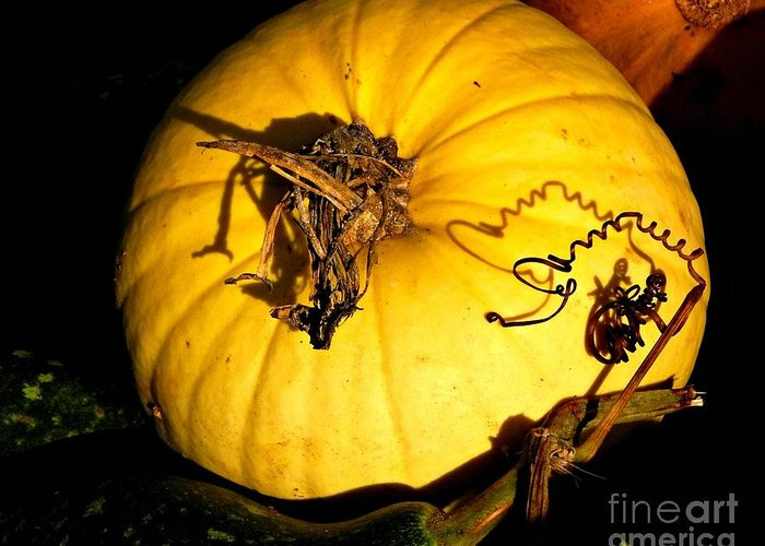 Squash Greeting Card featuring the photograph Shadowed Spiraled Squash by Beth Ferris Sale
