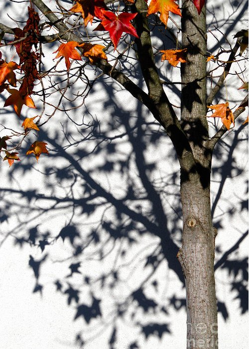 Cml Brown Greeting Card featuring the photograph Shadows Of Fall by CML Brown