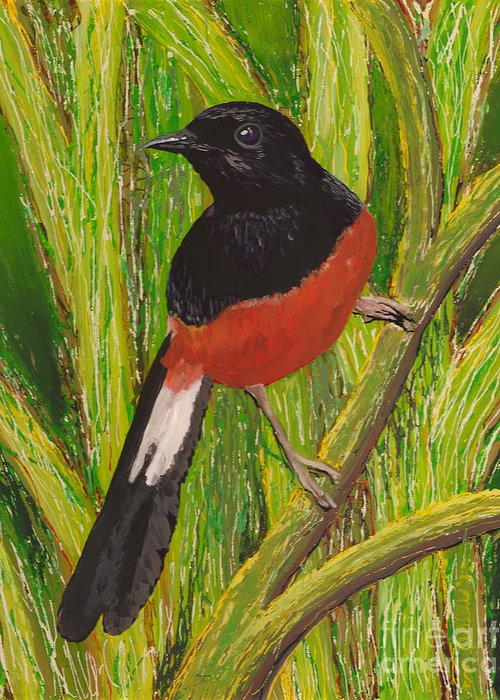 Hawaii Birds Greeting Card featuring the painting Shama by Anna Skaradzinska