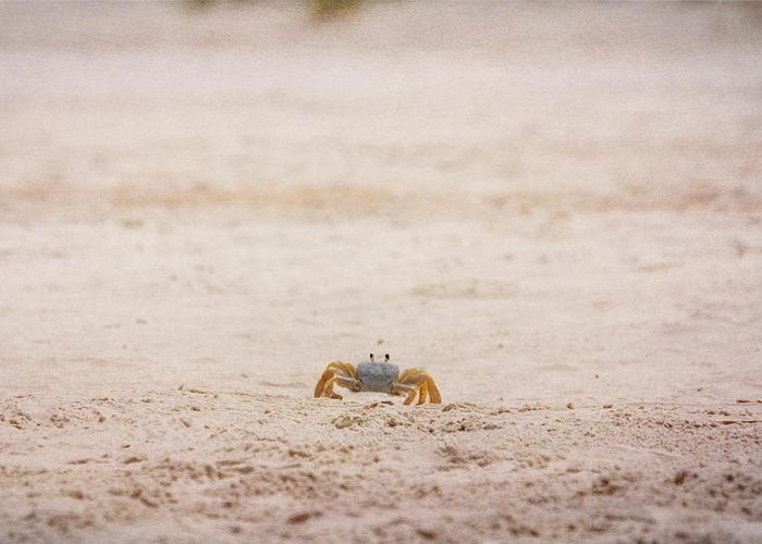 Crab Greeting Card featuring the photograph She Is Coming by Judy Hall-Folde