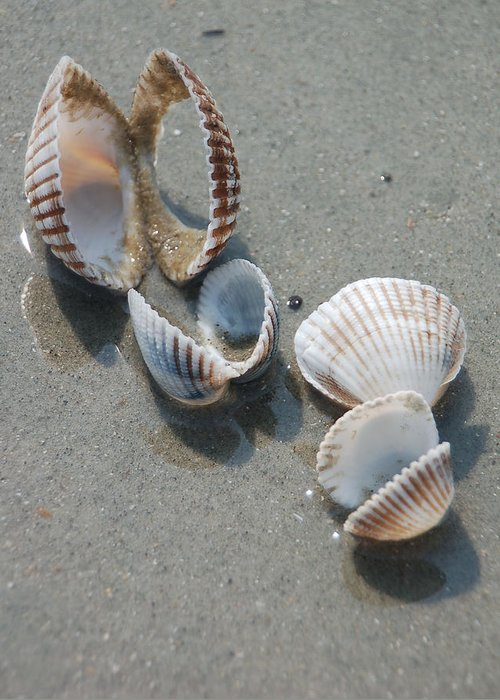 Sea Shell Greeting Card featuring the photograph She Sells Sea Shells by Suzanne Gaff