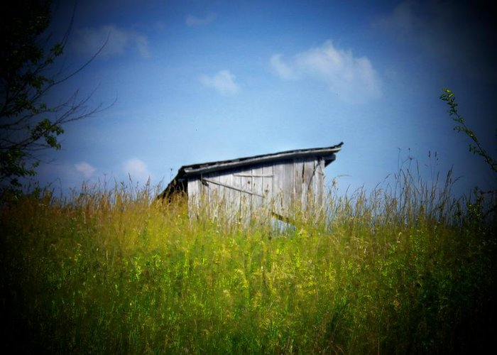Shed Greeting Card featuring the photograph Shed In Field by Joyce Kimble Smith