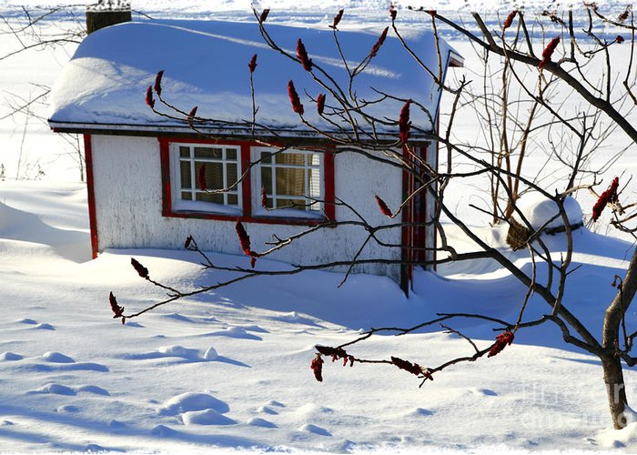 Shed Greeting Card featuring the photograph Shed In Winter by Sophie Vigneault