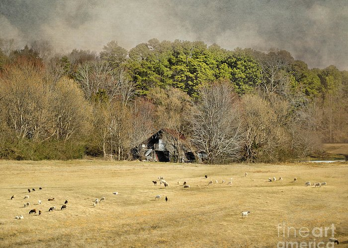 Barn Greeting Card featuring the photograph Sheep In The South by Jai Johnson