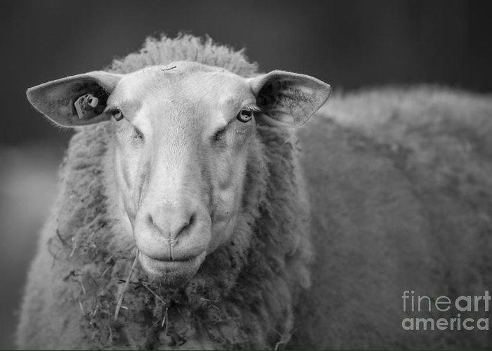 Sheep Portrait Animal Nature Greeting Card featuring the photograph Sheep by Maurizio Bacciarini