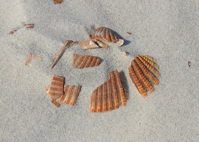Shell Greeting Card featuring the photograph Shell Jigsaw by Meandering Photography
